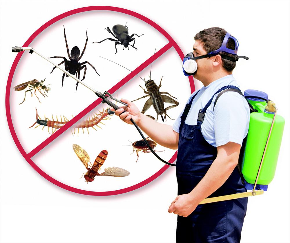 Chico Pest Control Pros