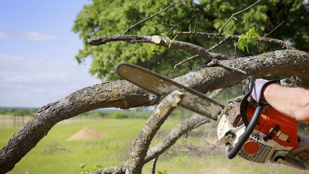 Tree Removal Longmont